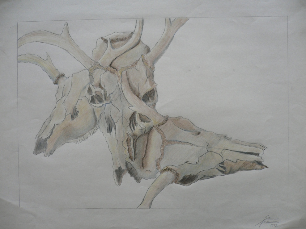 Deer Skull, colored pencil & charcoal on paper. 1993
